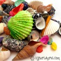 Sea Shells Color Palette Inspiration by KatersAcres