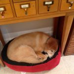 Tillie sleeping in KatersAcres polymer clay studio