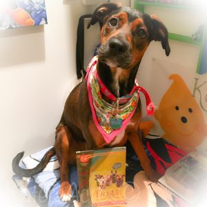 Mocha Latte with Christi Friesen's DOGS! Book for Polymer Clay